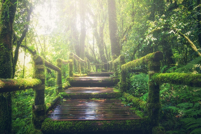 adventure-beautiful-boardwalk-bridge-235734